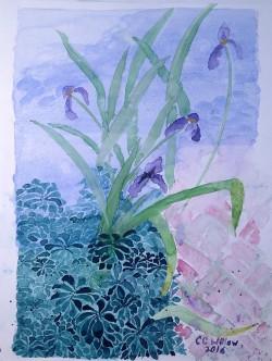 Iris at Gaiety Hill watercolor
