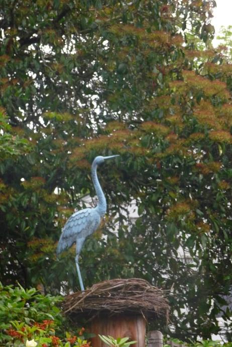 Heron at Gaiety Hill