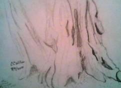 Redwood Study graphite