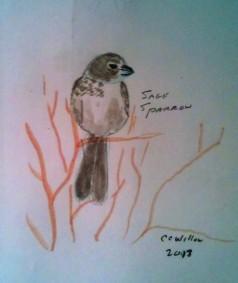 Sage Sparrow watercolor pencil