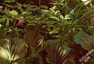 Bleeding Hearts &; Elephant Ears digital photography