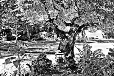 Sketch of Kingwood Shade digital photography