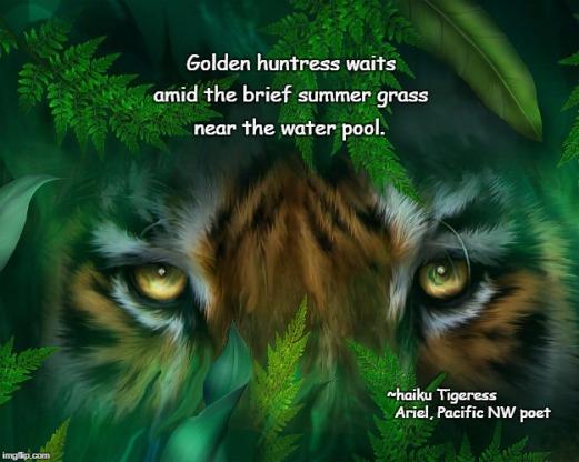 Tigeress haiku poem meme