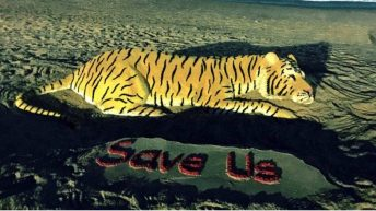 Tiger Save Us